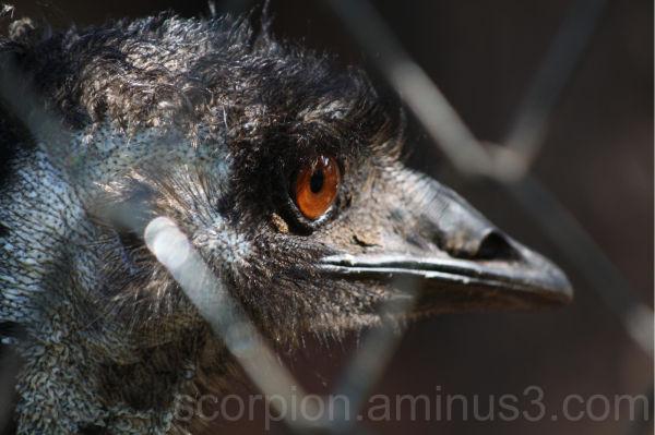 """ Bird's eye view... """