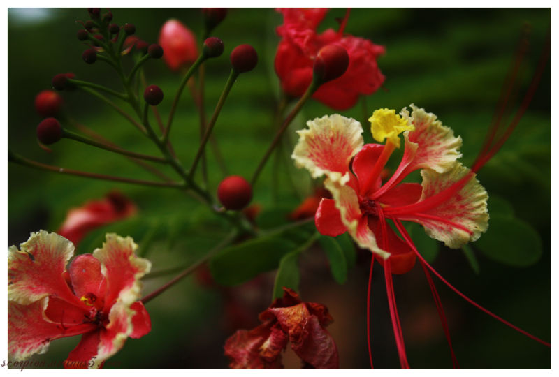 Blossomed  & Withered flowers..