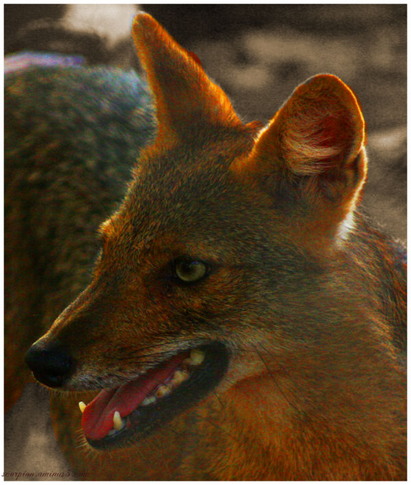 Foxy pose..?