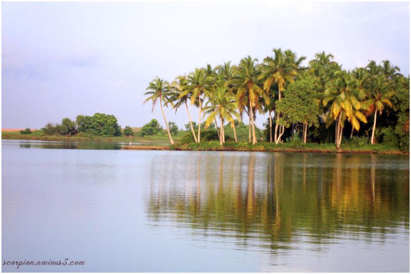 Coconut Grove...