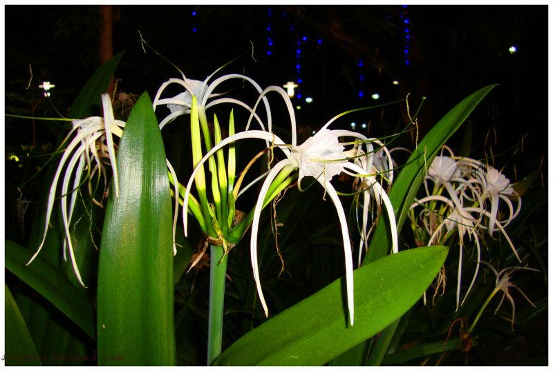 White spiky flower plant nature photos sunders photoblog white spiky flower mightylinksfo