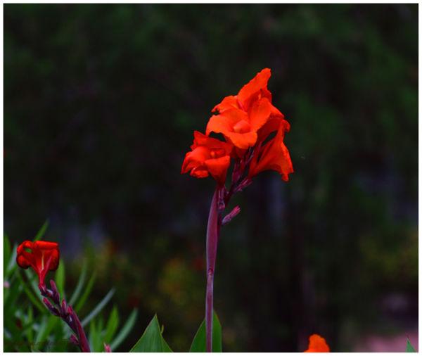 Orange Flower...