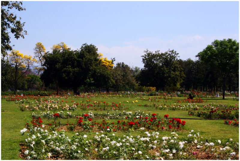 Chandigarh Rose Garden 4...