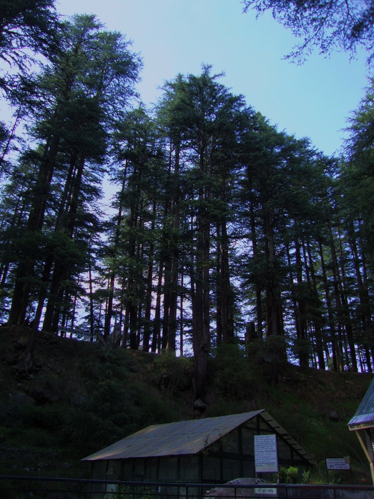 Trees against dark dusky sky...