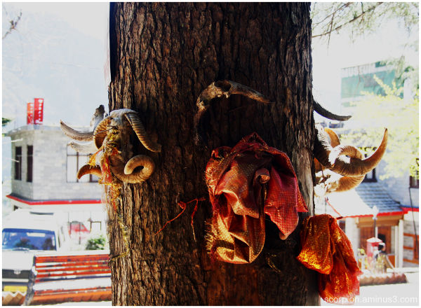 Gattotkacha Tree Temple @ Manali