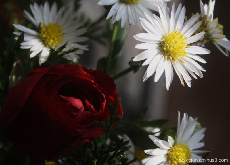 Closeup of Bouquet ...