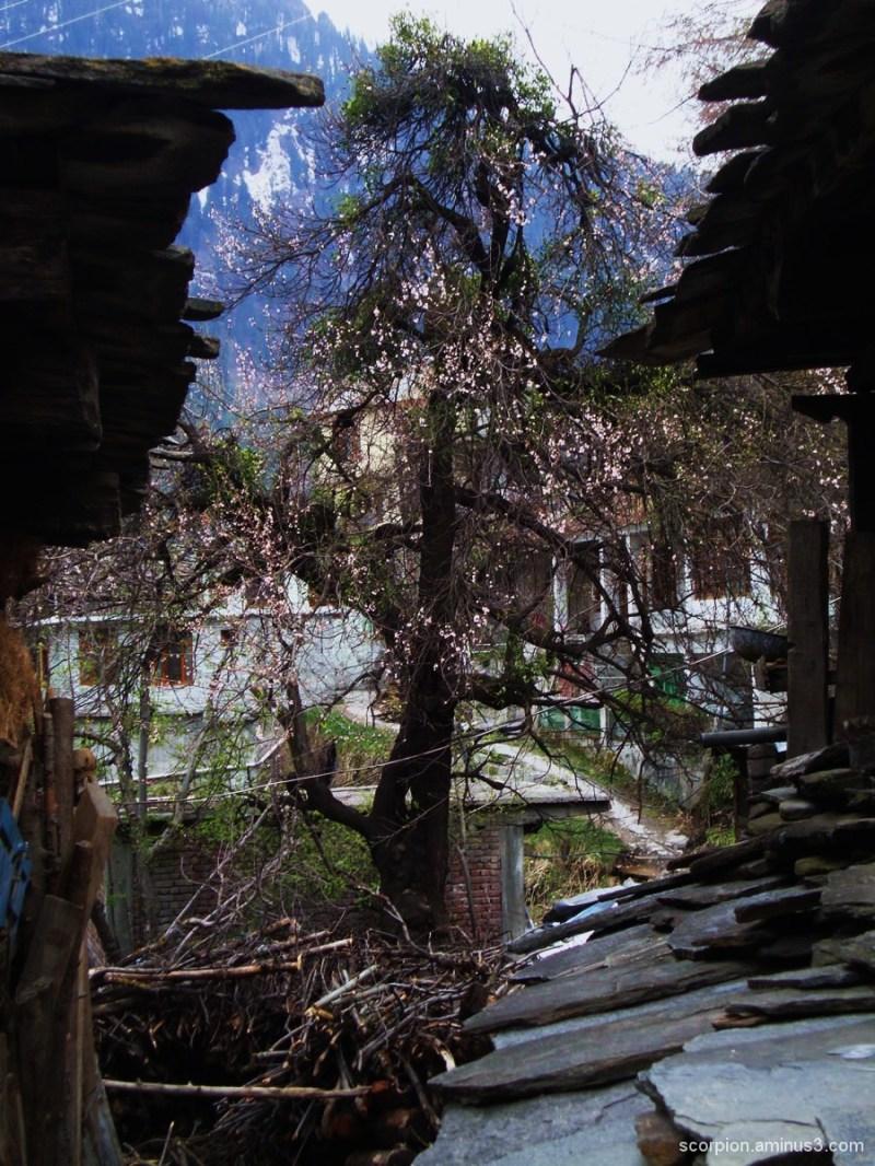 Old Manali - 5, Himachal Pradesh...