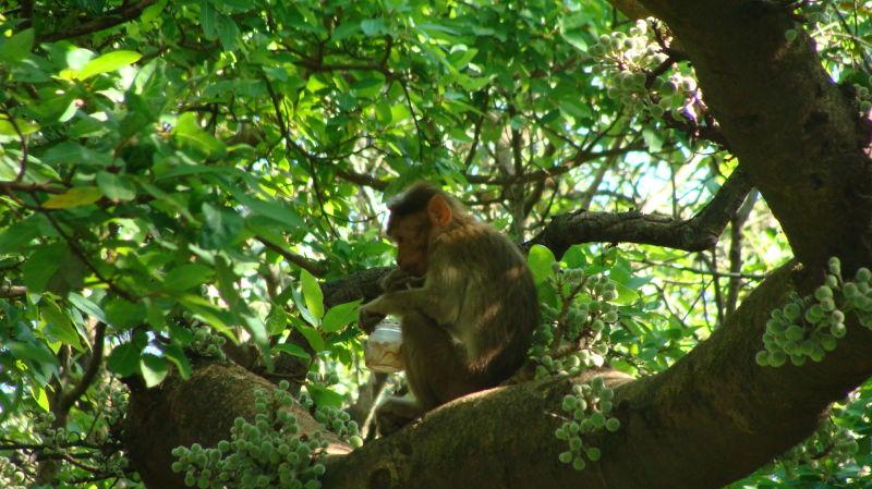 Monkey on the tree