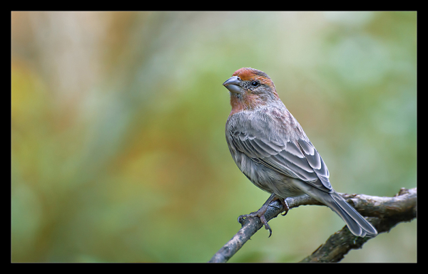 Fall bird 2