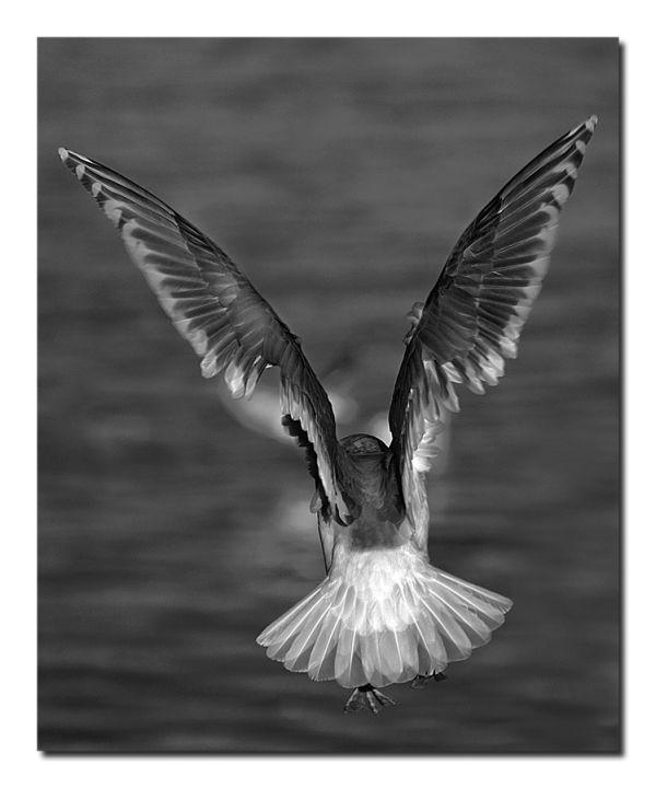 Winter wings
