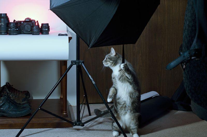My lighting assistant:)