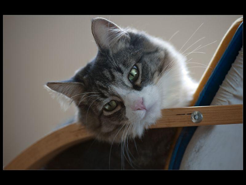 Feline daydreams