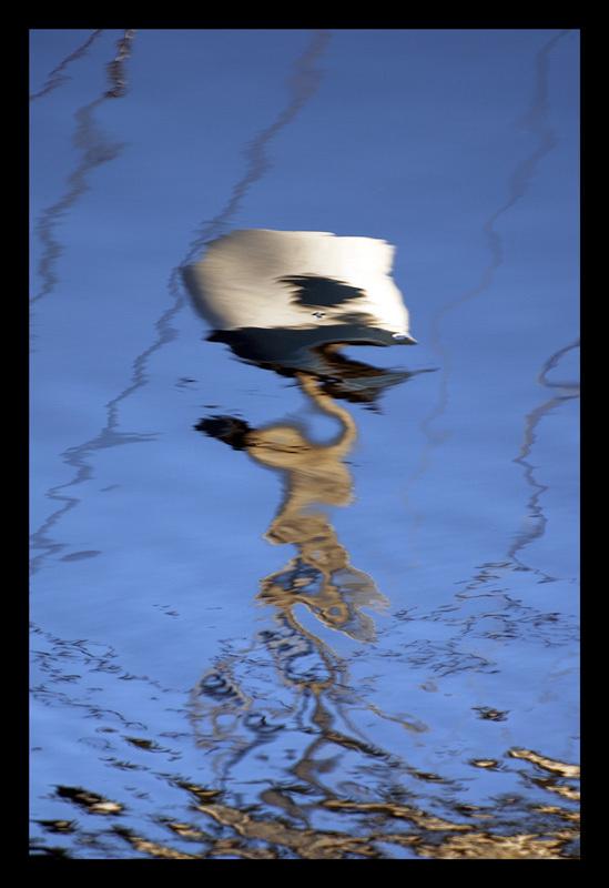 Alien reflection