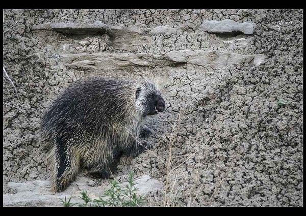 Unknown prarie creature