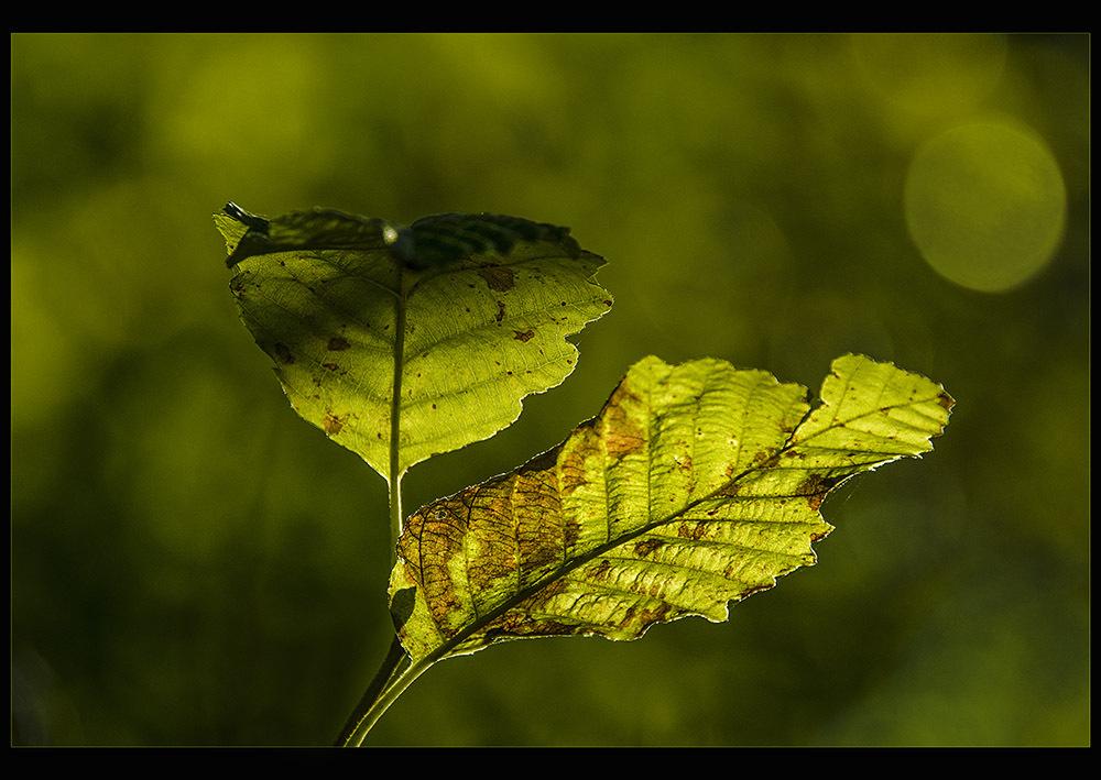 Fading September light