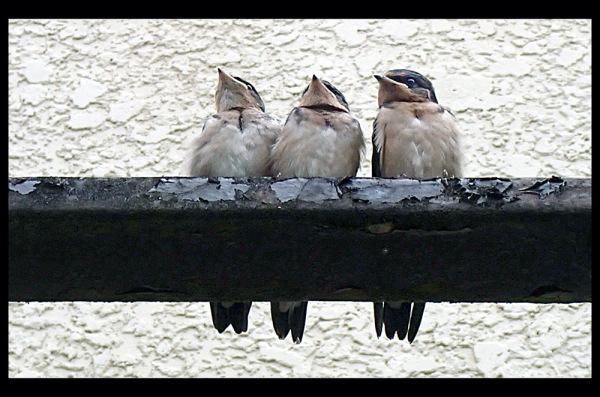 Three on a rail