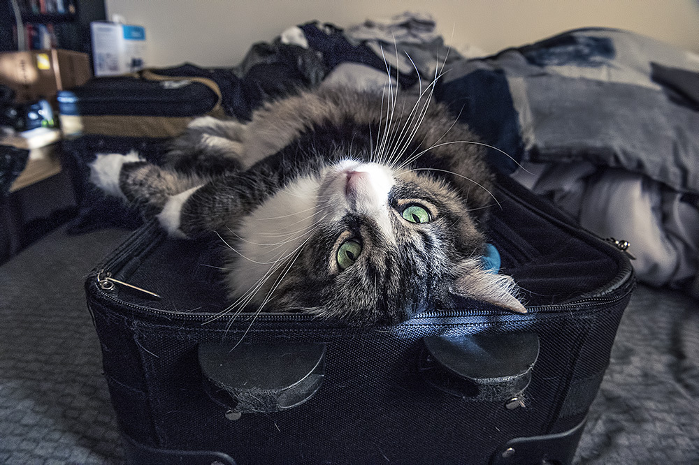 I fit....I come with!
