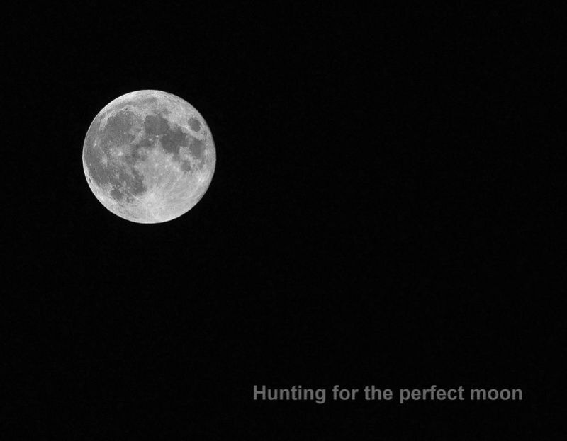 Hunting for the perfect moon
