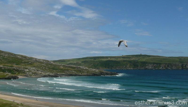 Jonathan Livingston Seagull on holidays