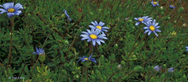 Flors del jardí