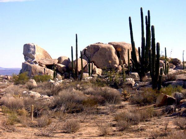 Desert catcus in Baja