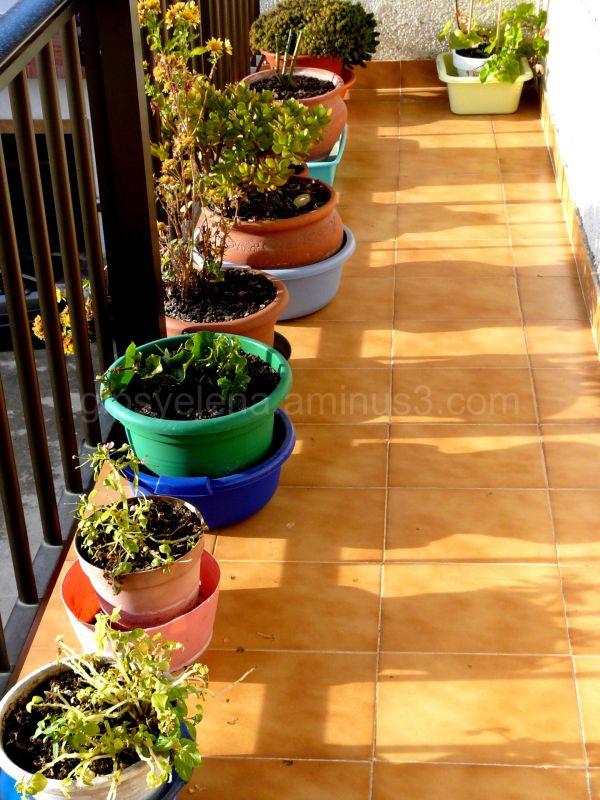 ..my mum's plants..
