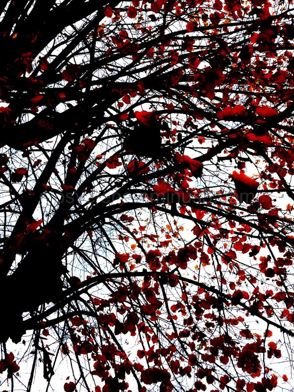 ..Leaves of passion..