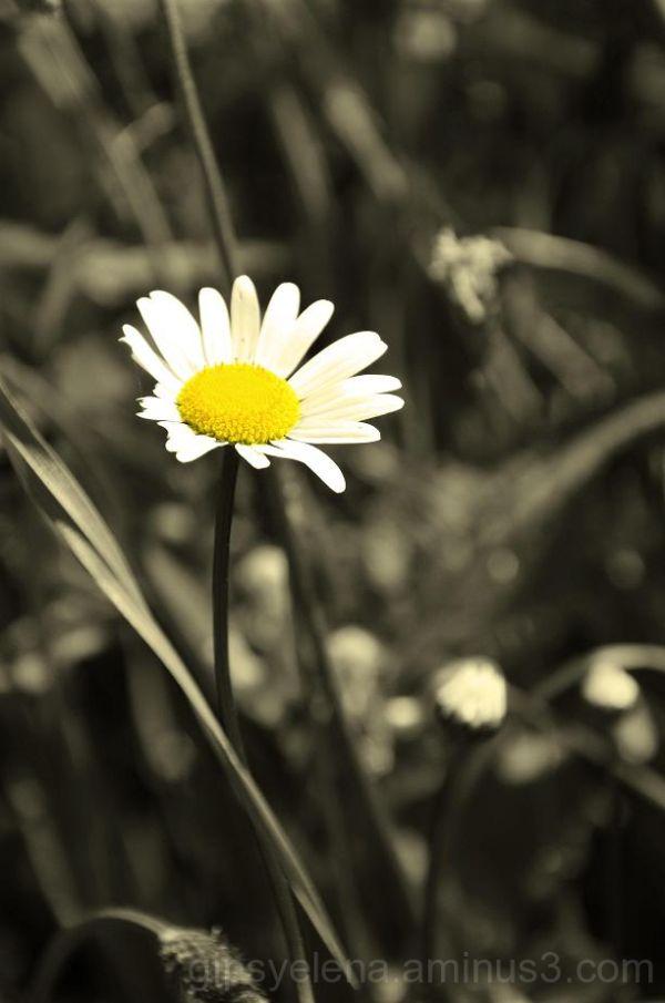 ..Intimist Nature V..