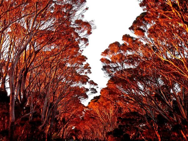 ..Trees on fire..