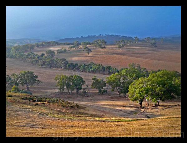 Australia: in the misty morning..