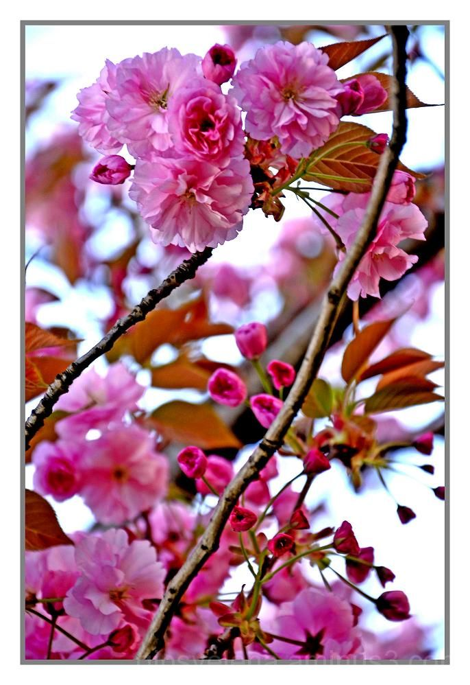 ..In pink colour..