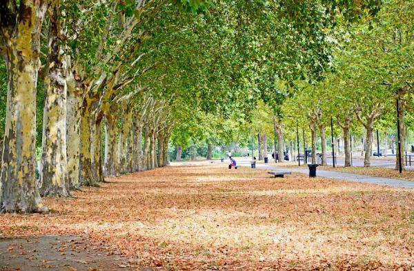 Life in Bordeaux II