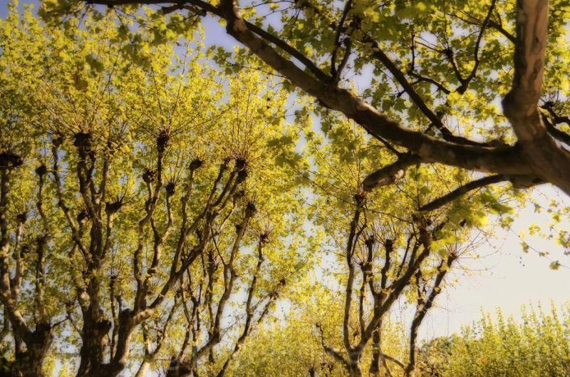 Dreamy trees...