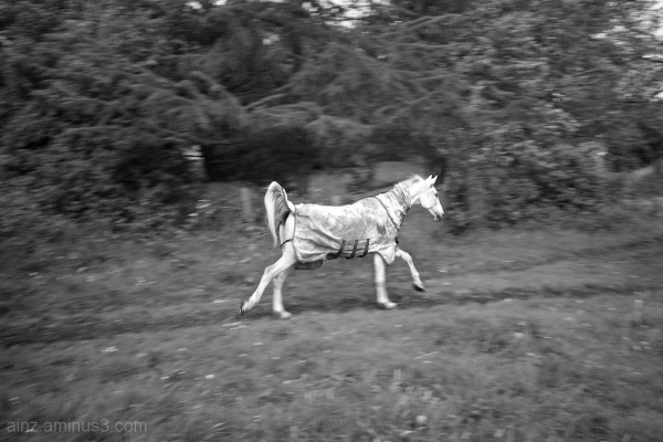 Horse at speed