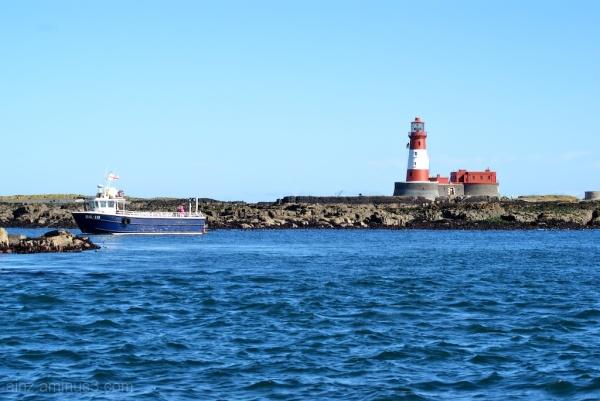 farne lighthouse