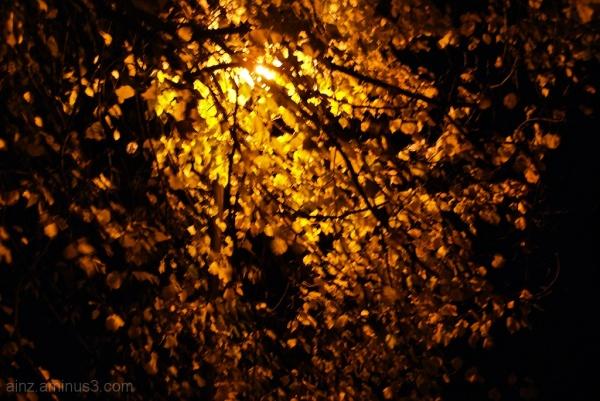 Autumnal Nightlight
