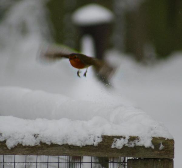 Robin landing