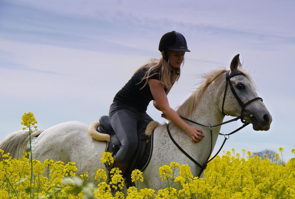 Arab, horse