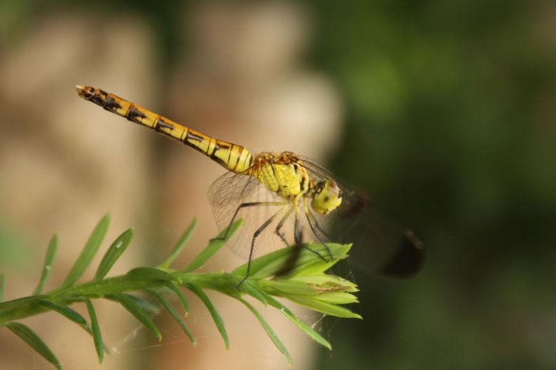 dragonfly @ hwajeong