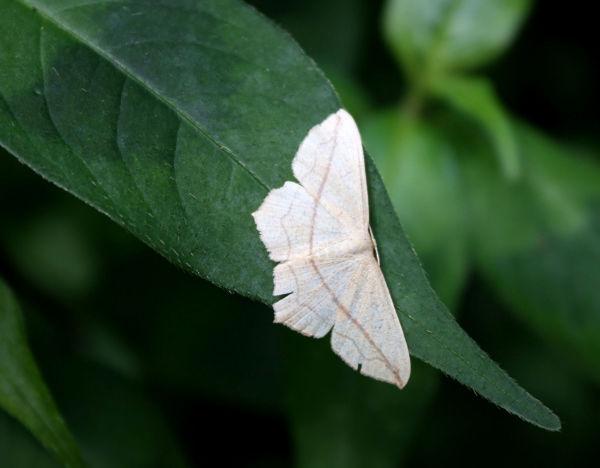 moth @ hongneung