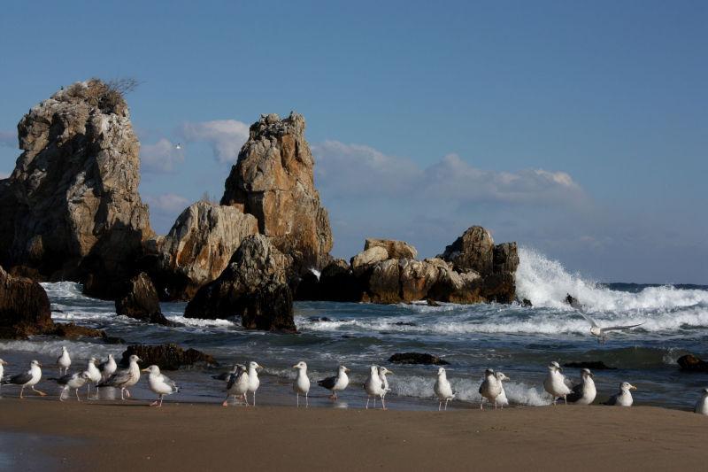 seagulls @ donghae
