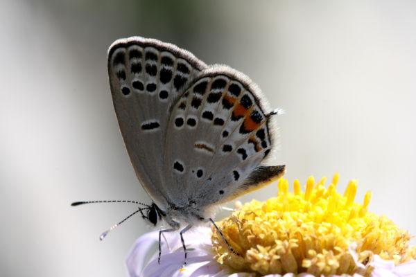 flutter flutter