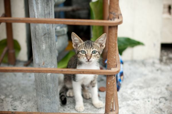a kitten in the pipes