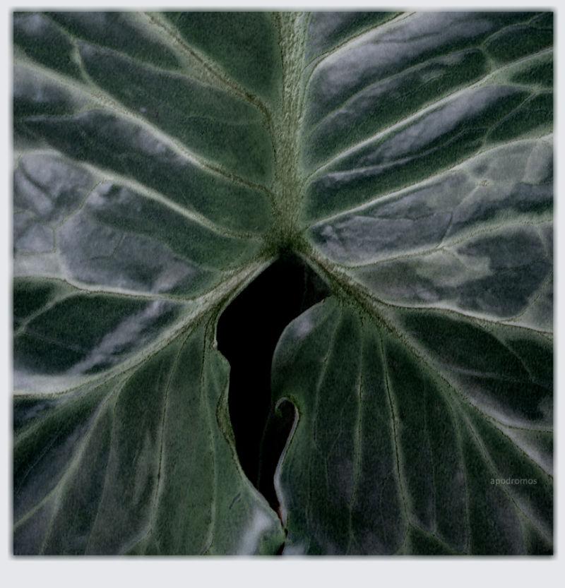pulmo green