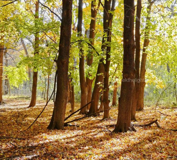Fabulous Fall Forest