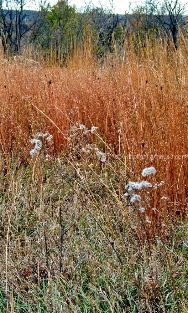 Autumn on the Prairie #2