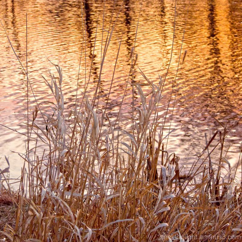 Thursday at the Pond