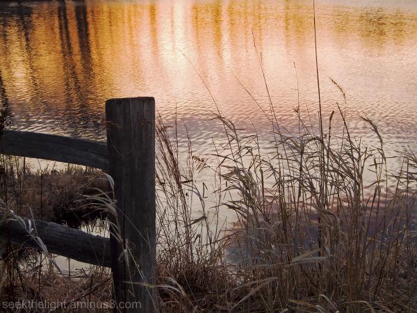Thursday at the Pond #3
