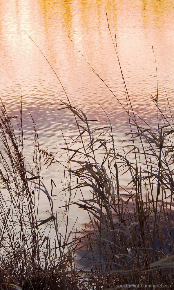 Thursday at the Pond #2