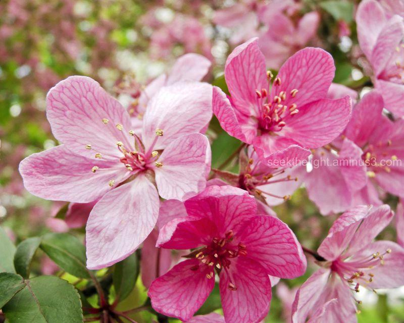 Prettiest Pink